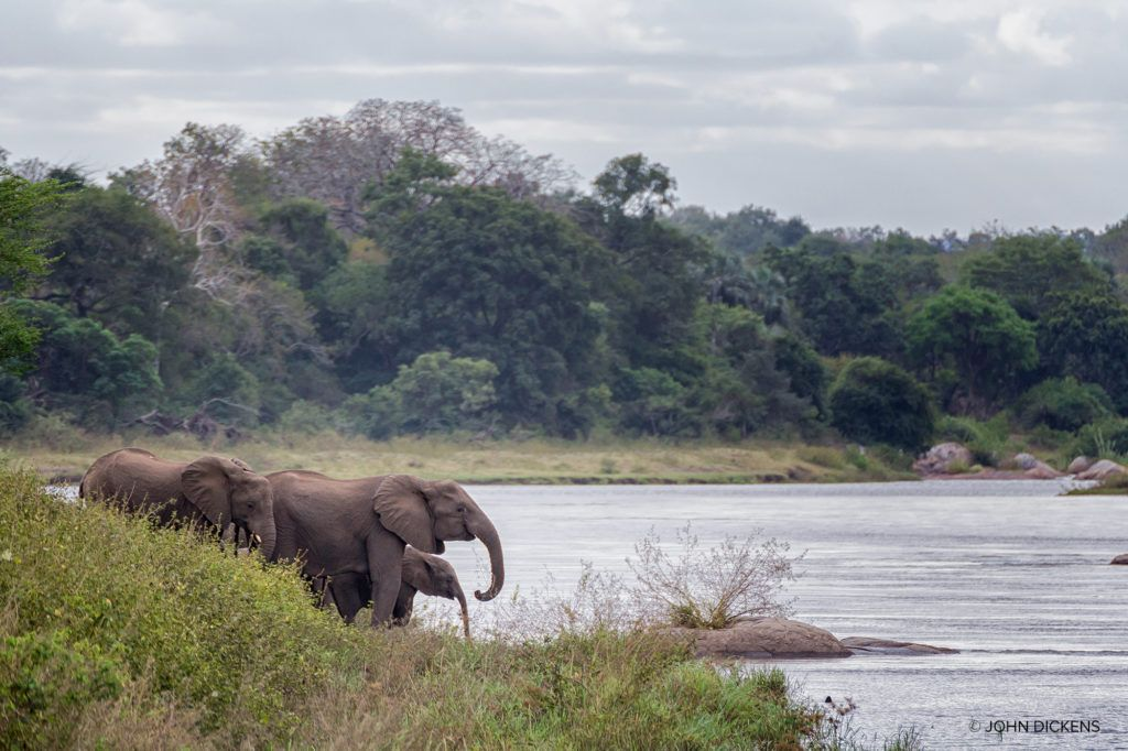 Elephants in reserve in Malawi.