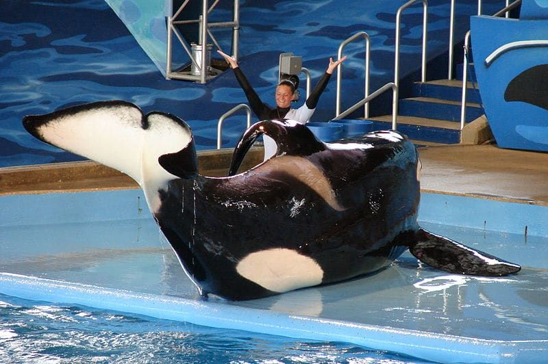 SeaWorld's Credit Rating Has Just Been Downgraded For Plunging Profits
