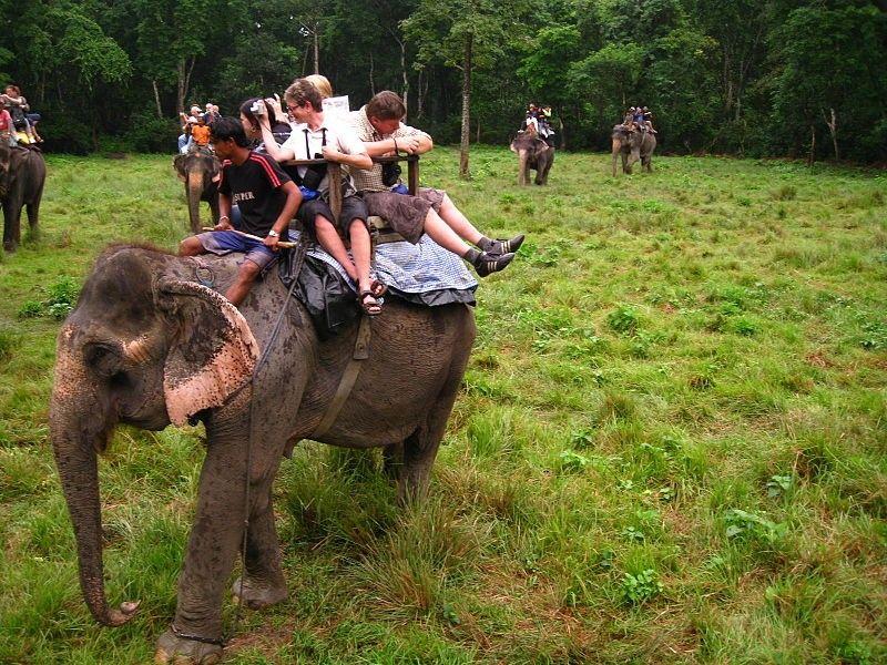 Bravo! This Tourism Company Has Stopped Cruel Elephant Rides