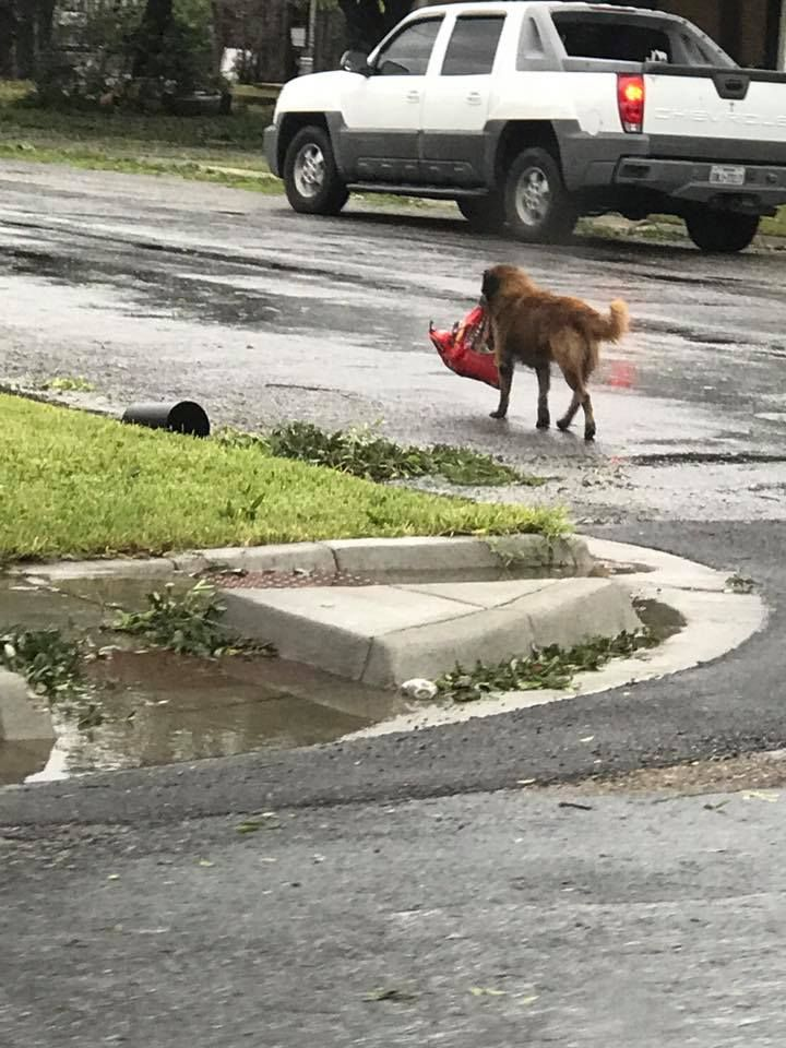 Dog Carrying Food In Houston
