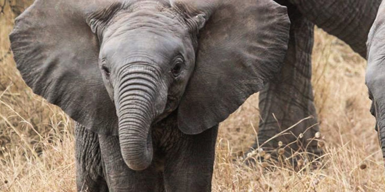 Sign: Stop Poacher Who Poisoned 100 Elephants from Ever Killing Again