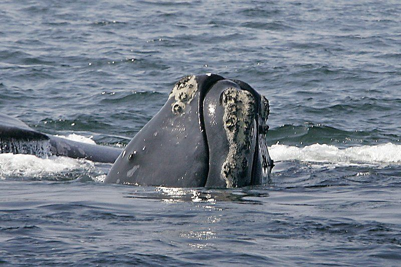 The US and Canada Team Up To Find Out Why Whales Are Dying