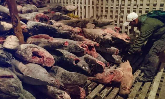 Fishing Boat Full of Thousands of Endangered Sharks Nabbed in the Galapagos