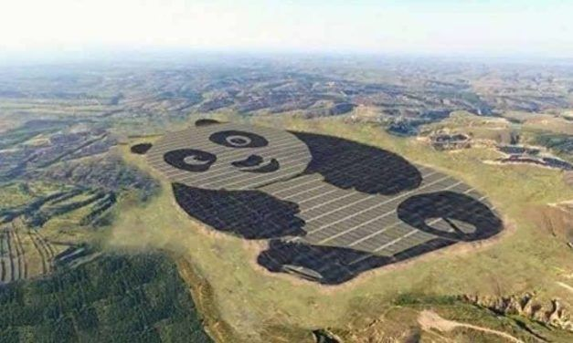China's Panda Solar Farms Draw Attention To Sustainable Energy