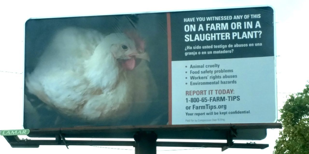 New Hotline Launched to Report Animal Cruelty and More at Factory Farms and Slaughterhouses