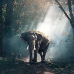 African Elephants Are Becoming Nocturnal to Hide From Poachers