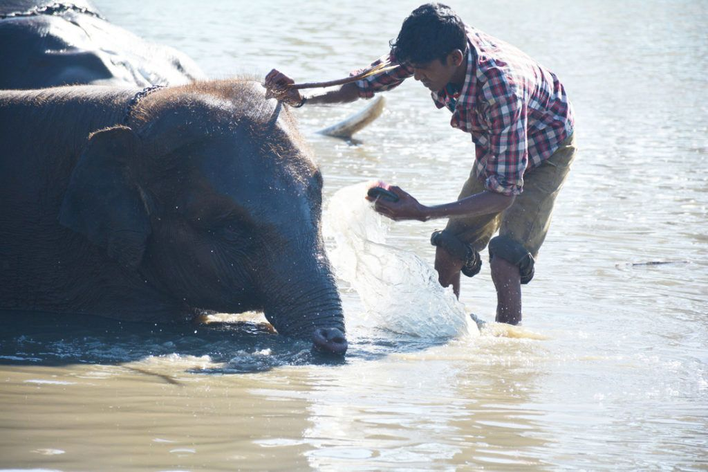 Mahout boy at Indian elephant camp bathes the elephant he is bonded with.