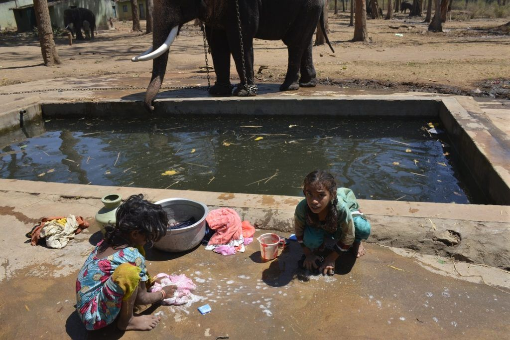 Elephants and humans share the same water source.