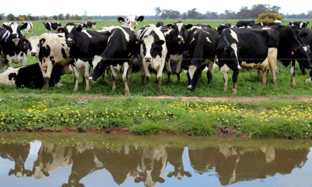 Citizens Run Proposed 'Mega-Dairy' Out of Town