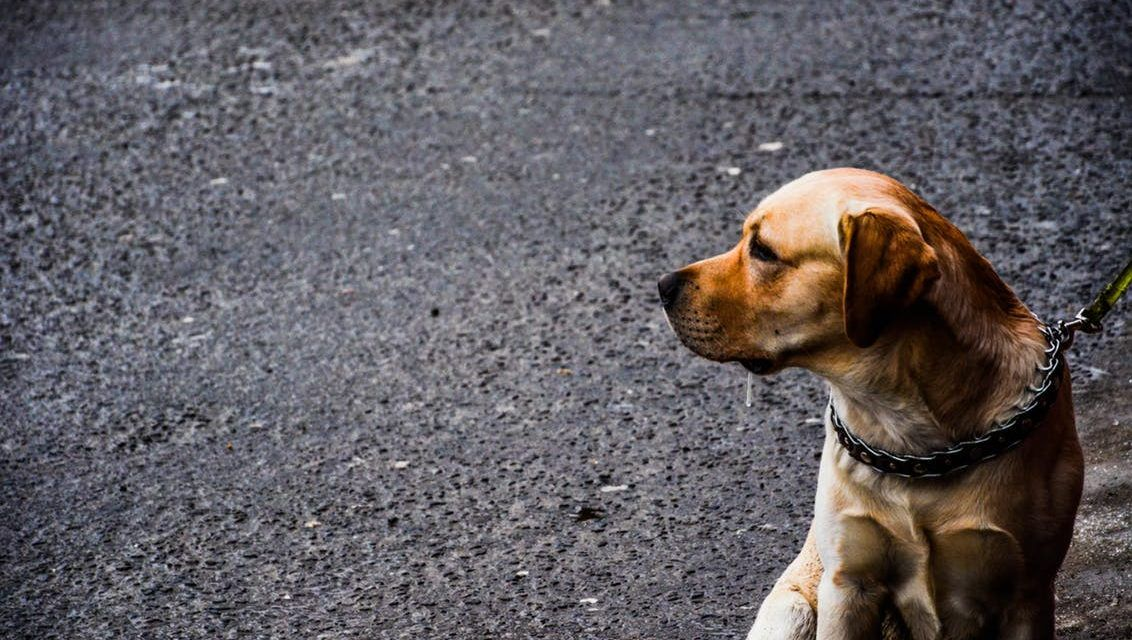 South Carolina May Soon Crack Down on Cruel Dog Tethering