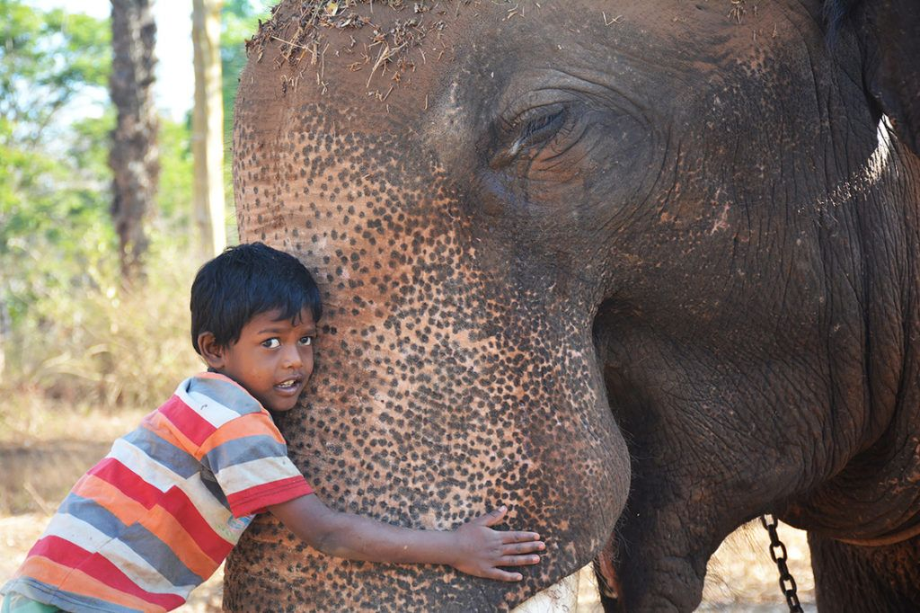 Mahout boy hugging an Indian elephant.
