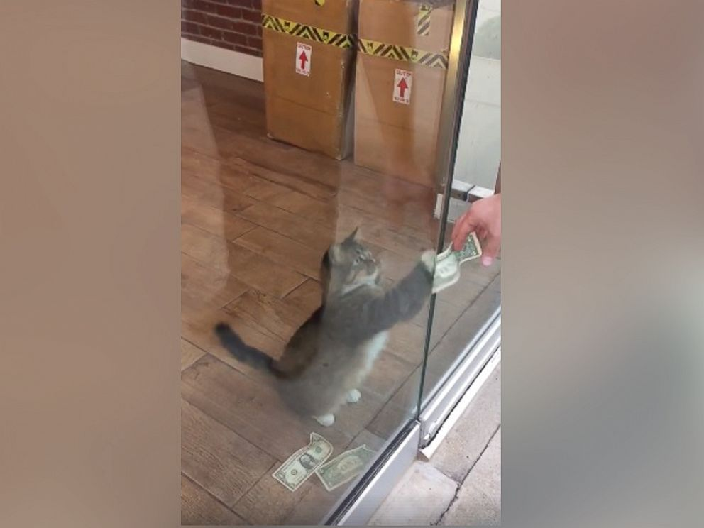 cat takes money to help the homeless