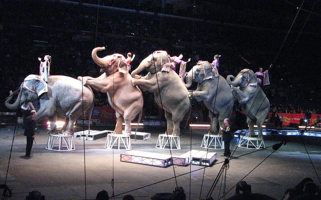 New York State Bans the Use of Elephants for Entertainment