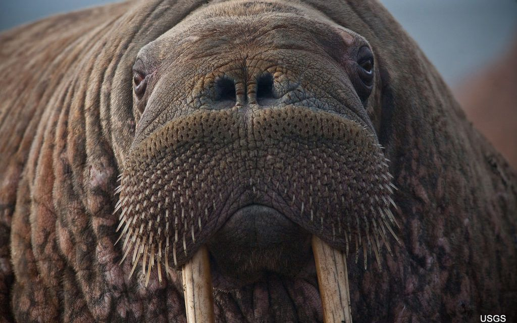 US Government Denies Endangered Species Protection for 25 Imperiled Species