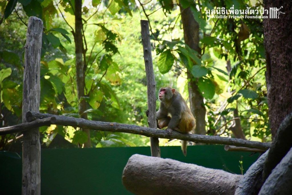 A rescued monkey sits on a branch in an enclosure. He had been in a cage for 25 years. Help put a stop to this at LFT.