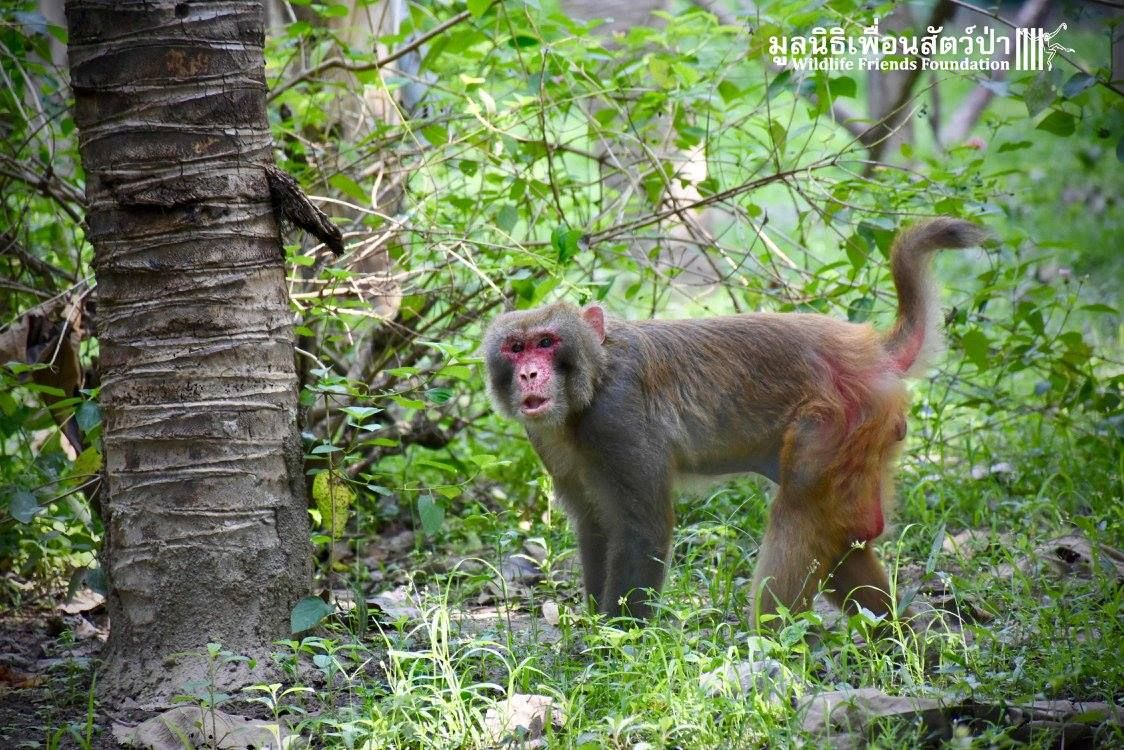 A rescued monkey walks near a tree. He had been in a cage for 25 years. Get involved at Lady Freethinker to help stop this.
