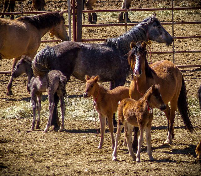 Wild horse corral by BLM