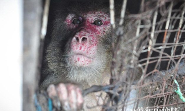 Monkey Trapped Between Two Buildings for 25 Years Finally Living the Life He Deserves