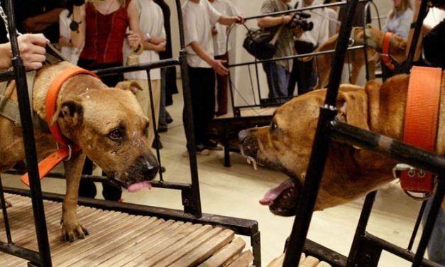 Line Drawn Between Creative Expression and Cruelty as Guggenheim Reluctantly Pulls Live Animal Works
