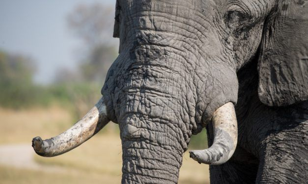 UK Proposes a New, Stricter Ban On Ivory
