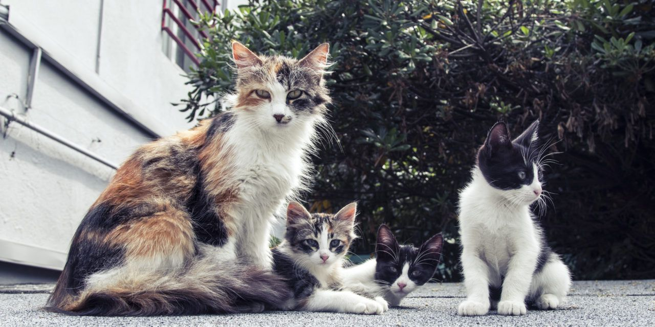Victory! California Becomes First State To Ban Sale of Animals from Puppy and Kitten Mills