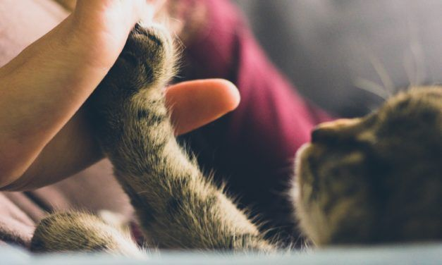Denver Moves to Ban Cruel Cat Declawing