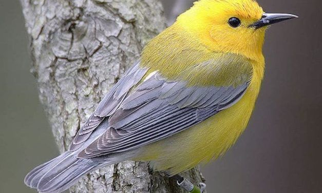 If This Dangerous Bill Passes, Industries can Kill America's Birds Without Question