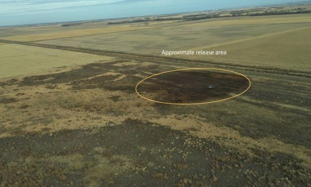 Keystone Pipeline Leaks Biggest Oil Spill in South Dakota's History