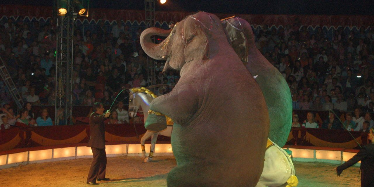 Wonderful News: India Bans Use of Animals in Circuses