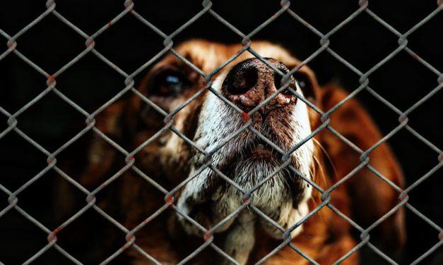 Spanish Court Jails Ex-President of Animal Shelter for Needlessly Killing Healthy Animals