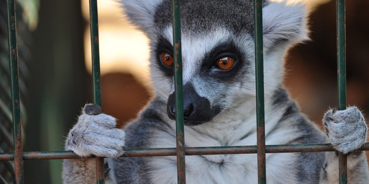 Huge Setback for Animal Rights as UK Government Fails to Recognize Animals as Sentient Beings