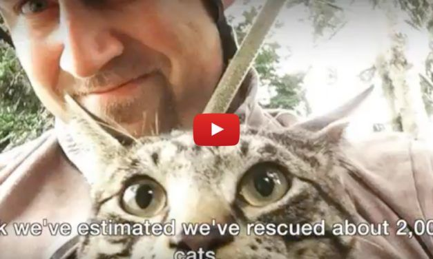 VIDEO: These Incredible Men Have Rescued Thousands of Cats Stuck in Trees
