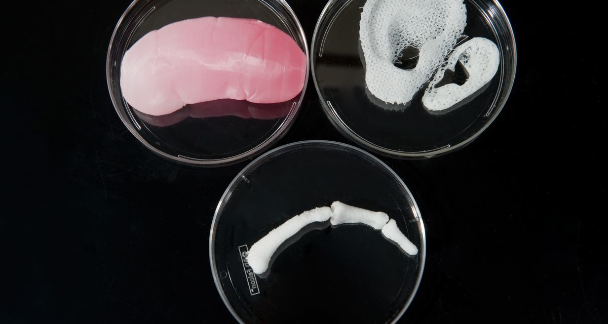 New 3D-Printed 'Mini Organs' Could Eliminate Cruel Animal Testing
