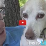 VIDEO: Libby Was Rescued from Medical Research – Just Look At Her Now!