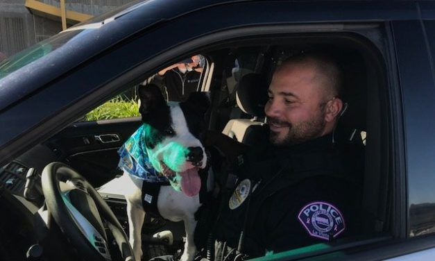 Cops Take Rescue Dogs for Ride-Alongs to Help them Get Adopted