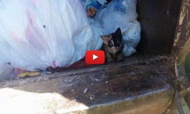 VIDEO: Trash Man Rescues the Tiniest Kitten Trapped in Garbage Truck