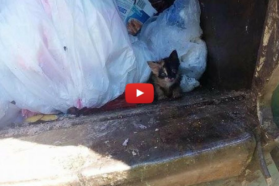 kitten in trash