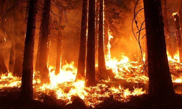 Recent Wildfires and Hurricanes are Pushing Endangered Animals to Extinction