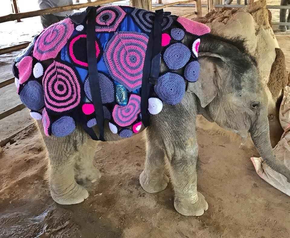 Orphaned elephant uses a blanket during winter.