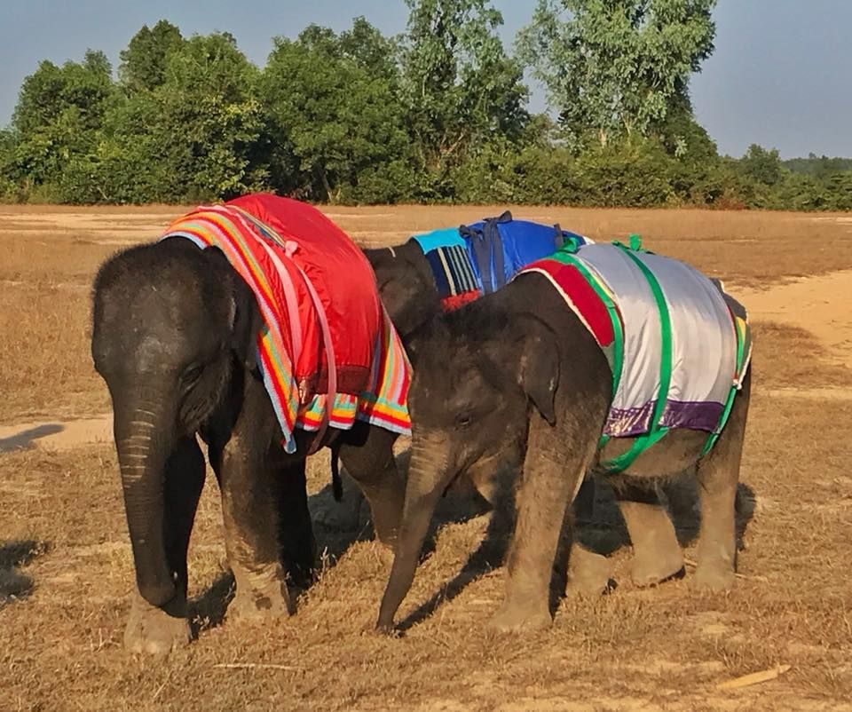 Elephants use blankets in Malaysia to keep warm.