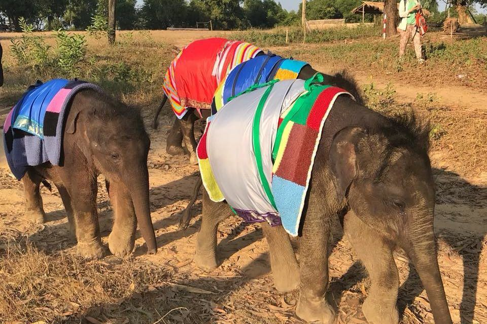 Orphaned Elephants Are Keeping Warm with Giant Handmade Sweaters