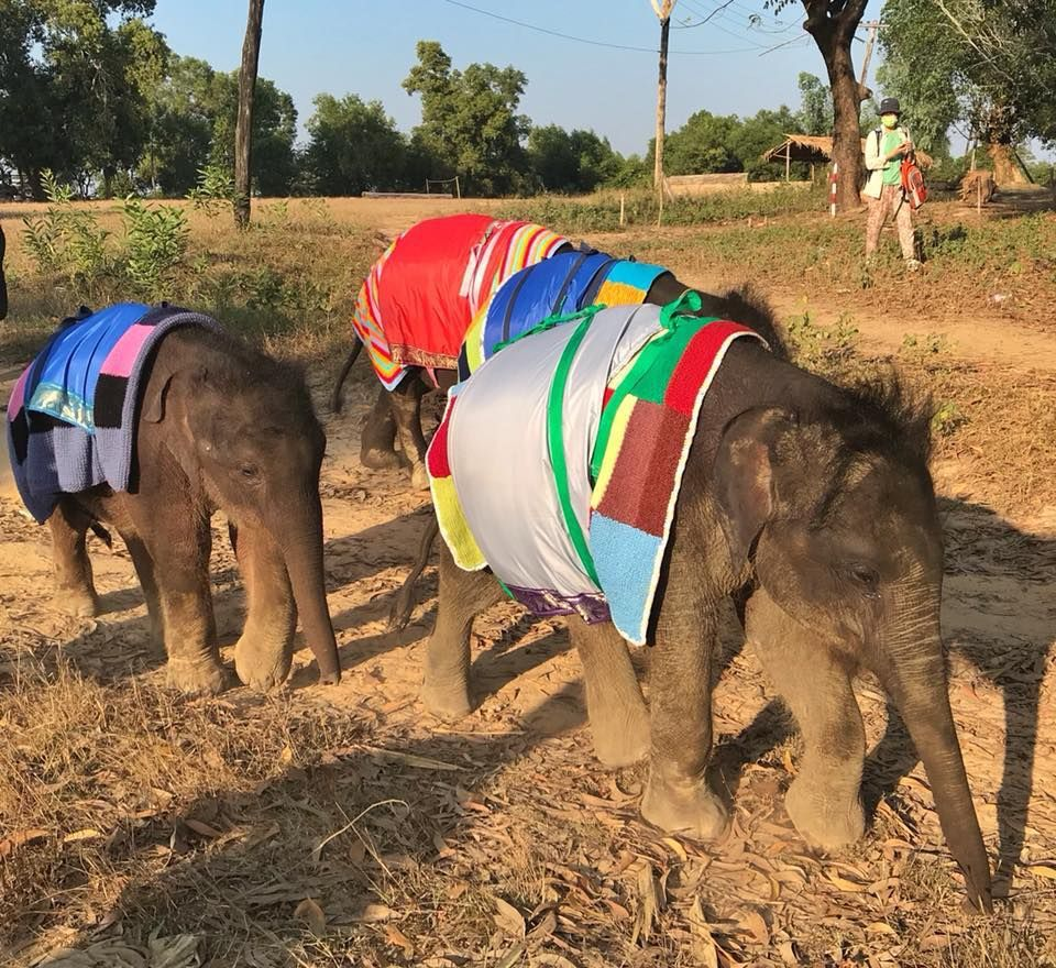 Baby elephants receive blankets from Blankets for Baby Rhinos to keep them warm in winter.