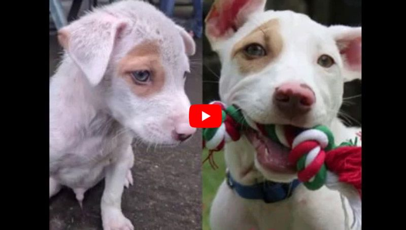 Christmas the rescue puppy before and after