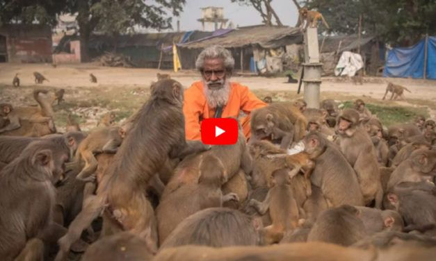 VIDEO: Heroic 'Monkey Man' Feeds 100 Primates Every Day