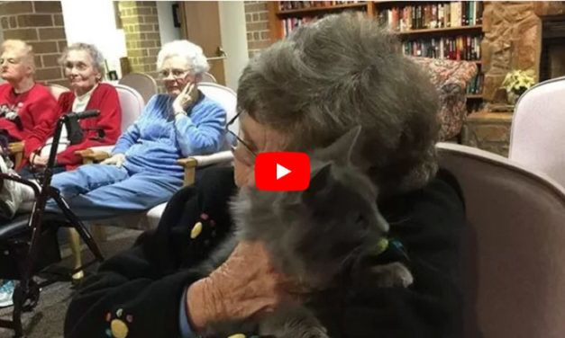 VIDEO: Senior Shelter Cats Visit Nursing Homes to Share Joy and Cuddles