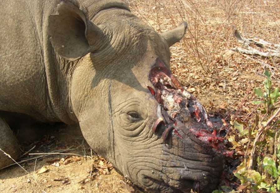 Report: African Rhino Poaching Jumped A Staggering 9,000 Percent in Just 7 Years