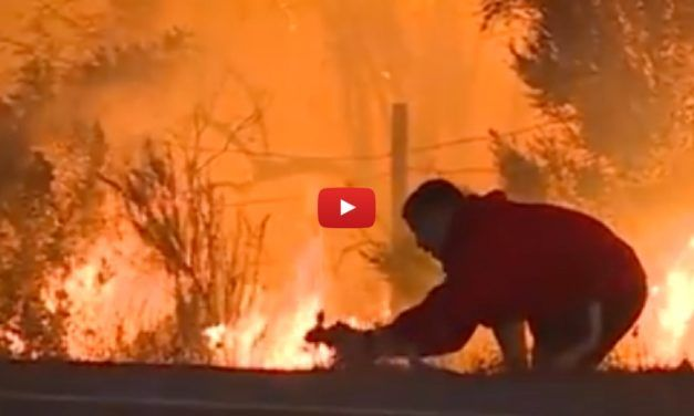Heroic Man Risks Burning to Save Rabbit from California Wildfire