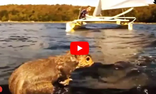 VIDEO: Sailors Rescue Drowning Squirrel Struggling Desperately in the Water