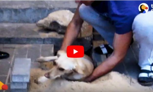 VIDEO: Kind Heroes Rip Up Sidewalk to Save Trapped Pregnant Dog