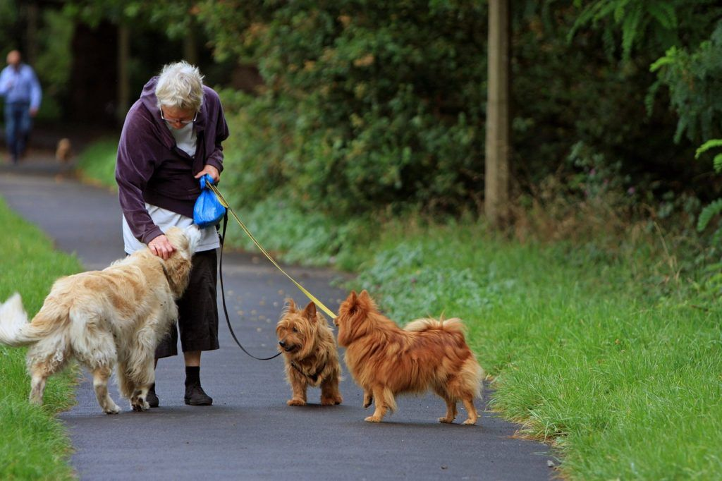 Older woman walking with dogs.